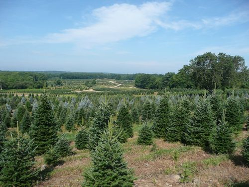For 57 Years Henry S Christmas Tree Farm Has Grown Some Of The Finest Christmas Trees In Rhode Island Holiday Gift Guide Holiday Holiday Gifts