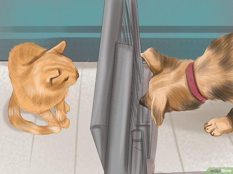 Make a Cat and Dog Get Along Dog cat, Cat adoption, Cat care