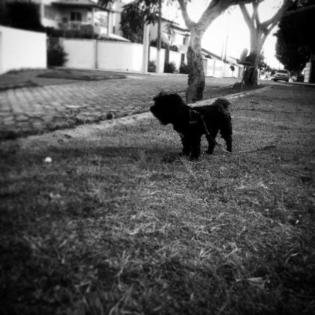 Belinha #dog #animalstyle #animallovers #animal_captures #animal #enjoy #epic_capture #TagsForLikes #blackandwhite #pretoebranco #tudopretonobranco #pixrlexpress #pixrl #eucurtomotorola #motofoto #igers #igersES #ig_espiritosanto #ig_espiritosanto_pb #pb #bw #monotone #monotom #monophoto #nature