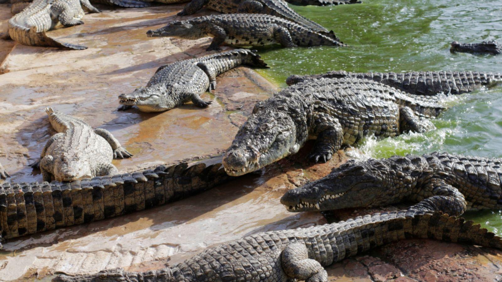 ما هو تفسير التمساح للعزباء والمتزوجة عند ابن سيرين Animals Turtle