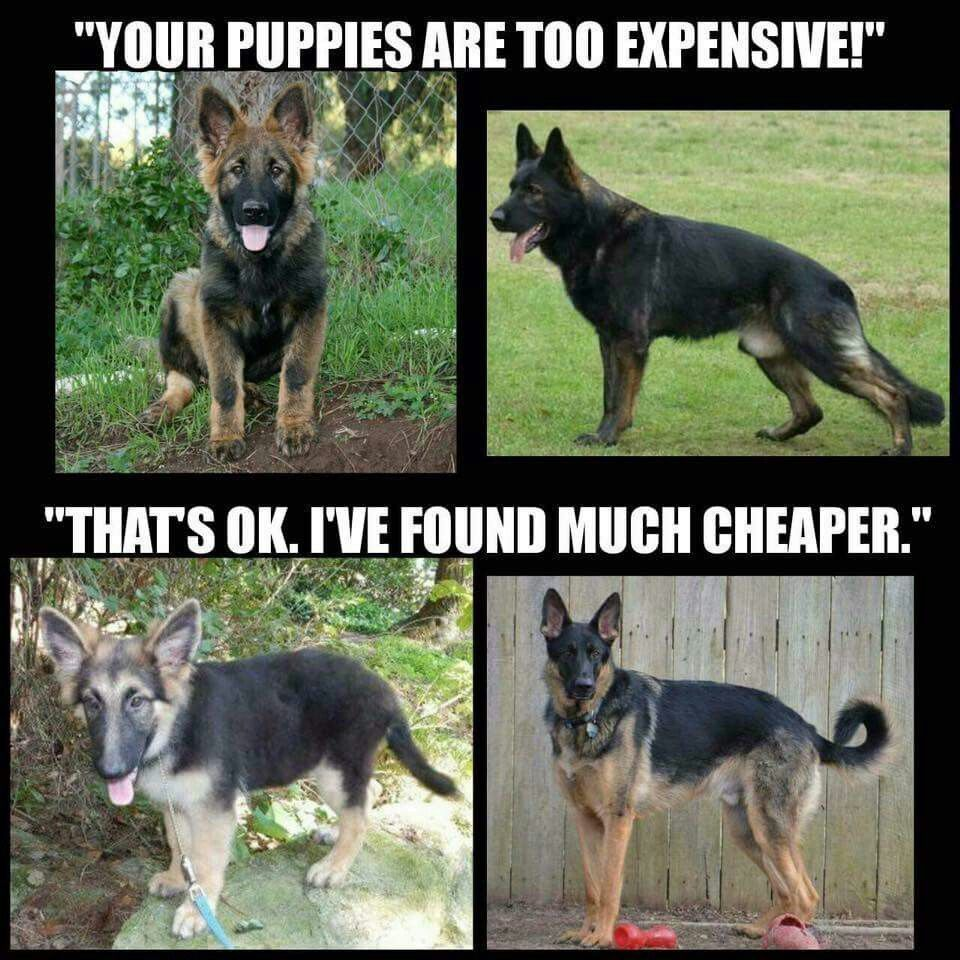 You Get What You Pay For Working Dogs Cool Pets Funny Animals