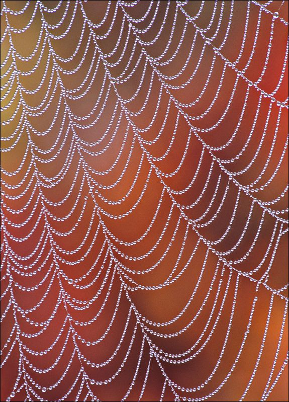Cascading Pearls- Patrick Zephyr spiders web | MotherEarth