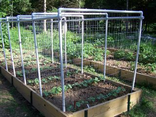 Our Saturday Project A Bean Trellis System In The Garden 400 x 300