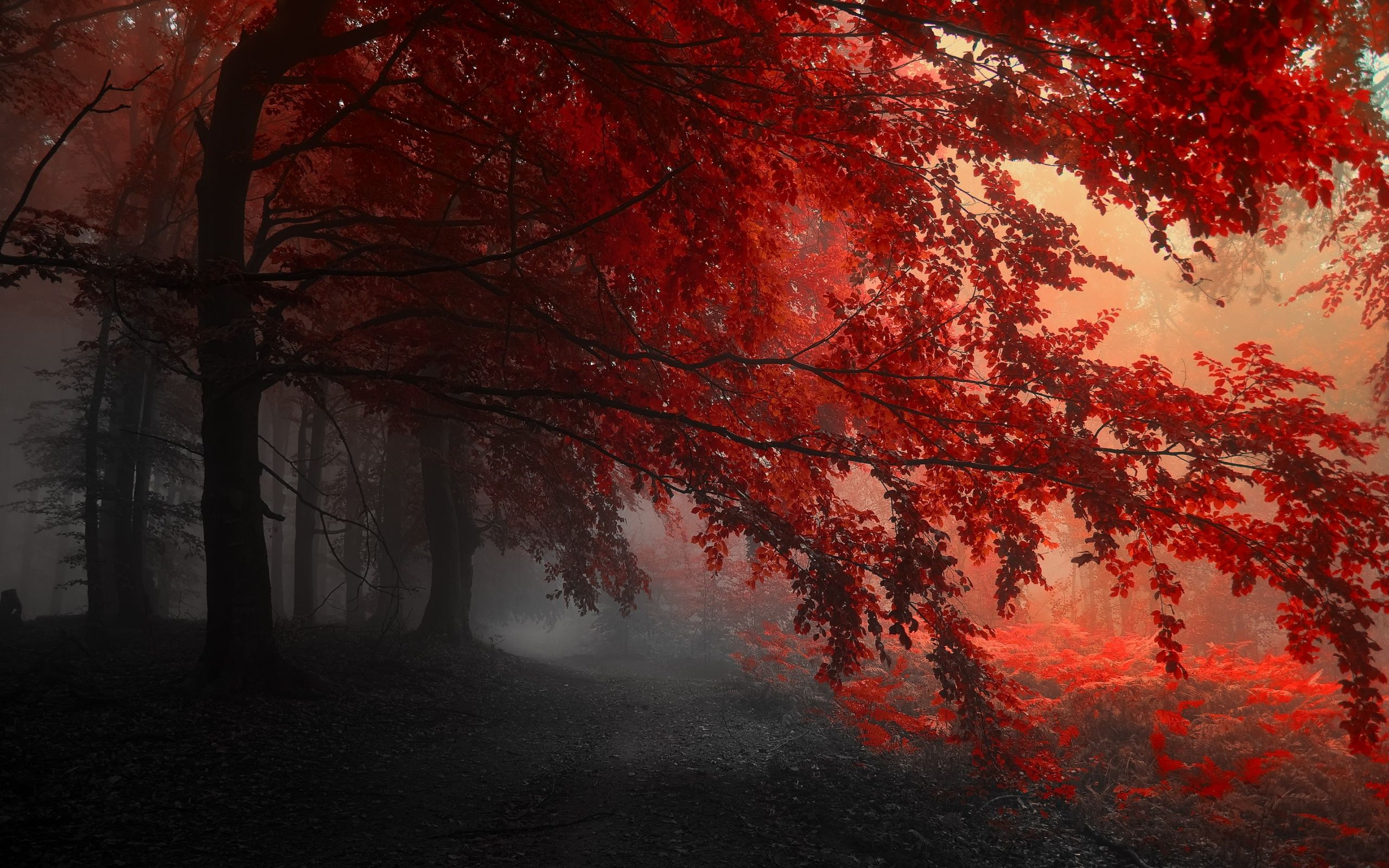 Red Forest Autumn Wallpaper Hd Dekstop 7056 Backgrounds