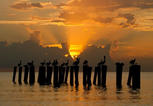 pelican sunset by William Miller 21 on Flickr.