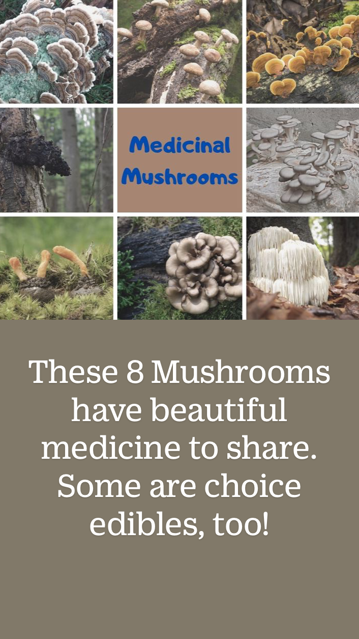 These 8 Mushrooms have loads of medicine to share.