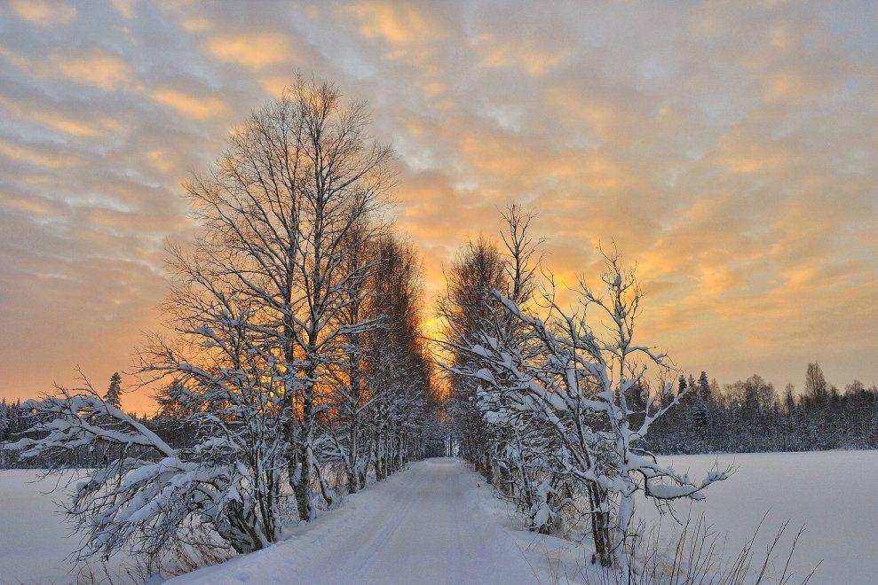 Svezia, la magia dell'inverno lappone - Repubblica.it