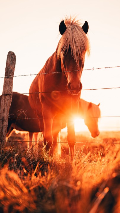 Hi Best Wallpaper For You Iphone Download This Application Https Itunes Apple Com App Id892283400 Horse Wallpaper Pretty Horses Horse Pictures
