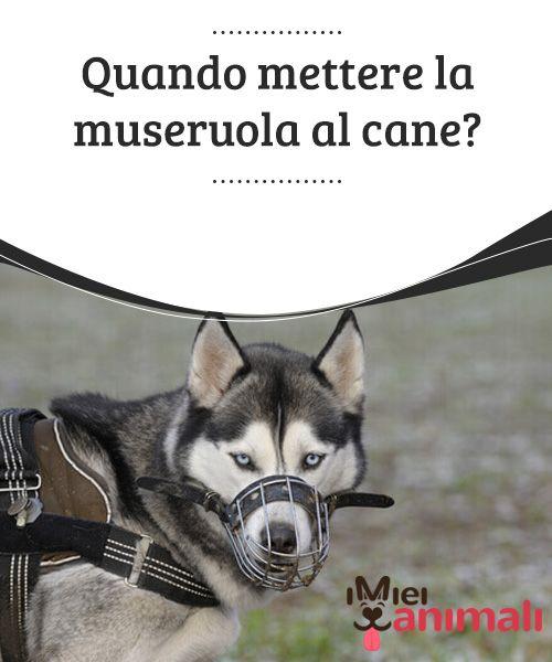 Quando mettere la museruola al cane?   Se il vostro #cane non è considerato una #minaccia per l'asl, ma si comporta in modo #distruttivo, non sempre è il caso di utilizzare la #museruola. #Consigli