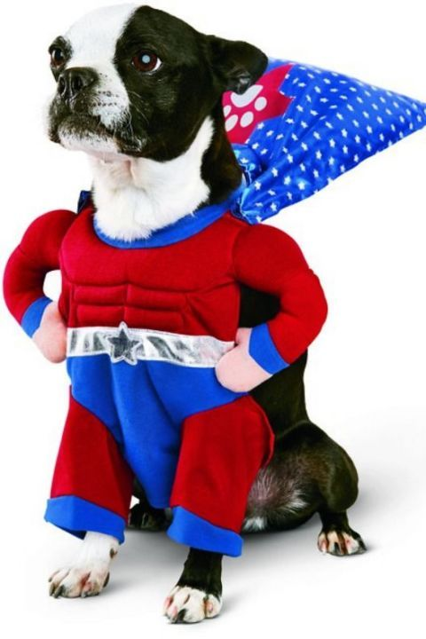 53 of the Cutest Halloween Costumes for Dogs