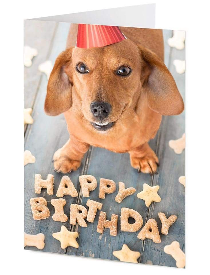 Pin By Trucy Baker On I Love Doxies Happy Birthday