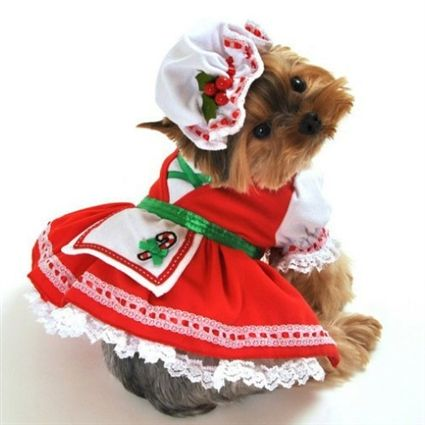 Candy Cane Cutie Christmas Dog Costume Dress Small Dog Costumes
