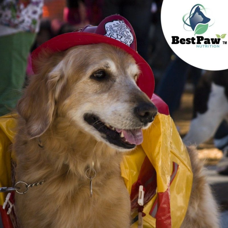 Today is National Pet Fire Safety Day! Fire safety is