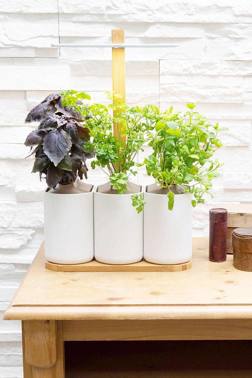 Herbes Aromatiques D Intérieur kit de rempotage en 2020   jardinage de légumes d'intérieur
