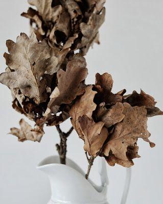 acorns in autumn | photography . Fotografie . photographie | Gudrun Arndt @ Fotosache Arndt |