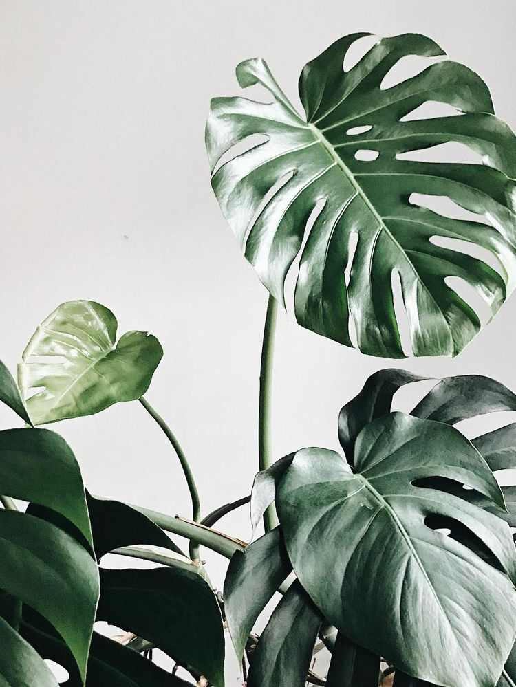 Pin by Vagskee on LEAVES Plants, Plant wallpaper, Plant