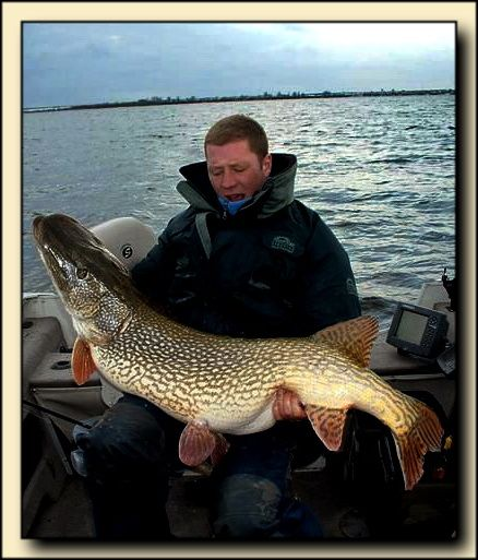 """Turtle Lake in Northern Saskatchewan [Canada] is where this monster was caught. The fisherman said """"No one will ever see me swim in Turtle Lake again!!"""" This is a new Canadian record - 56 inch 55 Pound Northern Pike. He was reeling in a 36 inch pike when the larger 66 incher latched on to it and he landed them both in his boat! Makes one wonder if we should [maybe] be using larger lures.........sometimes."""