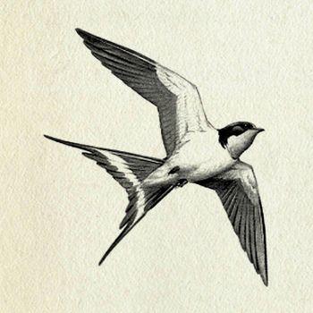 Vintage Bird Clip Art Swallow Bird Tattoos Bird Drawings Birds Tattoo