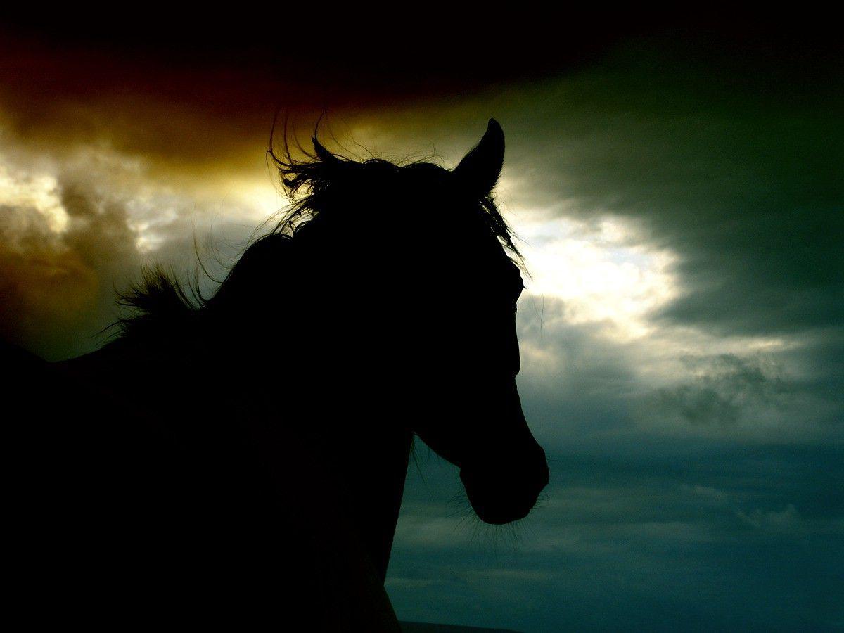 Wild Horses Sunset Wallpaper HD Resolution 2QSMk