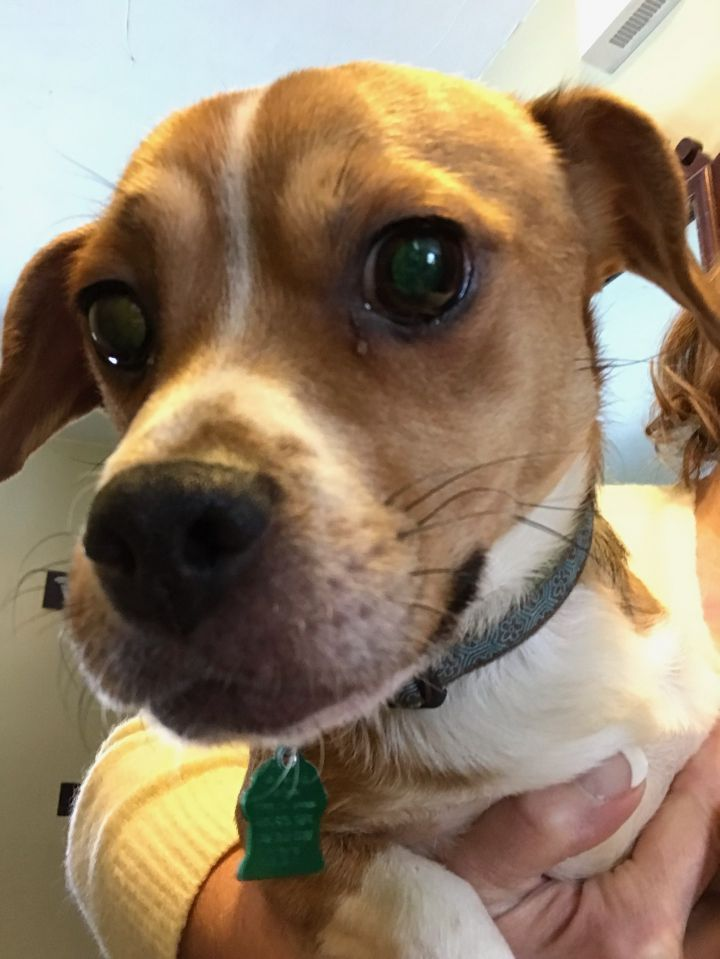 Adopt kenny on dog personality dog adoption help