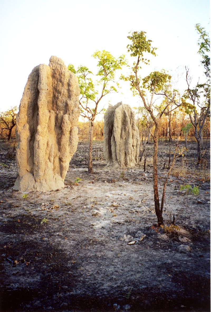 Termite cathedral mounds in a bushfire blackened tropical savanna - Evolutionary history of life - Wikipedia, the free encyclopedia