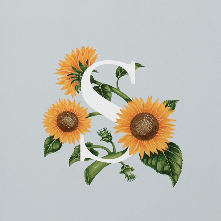 Sunflower   Sunflower illustration, Edible flowers ...