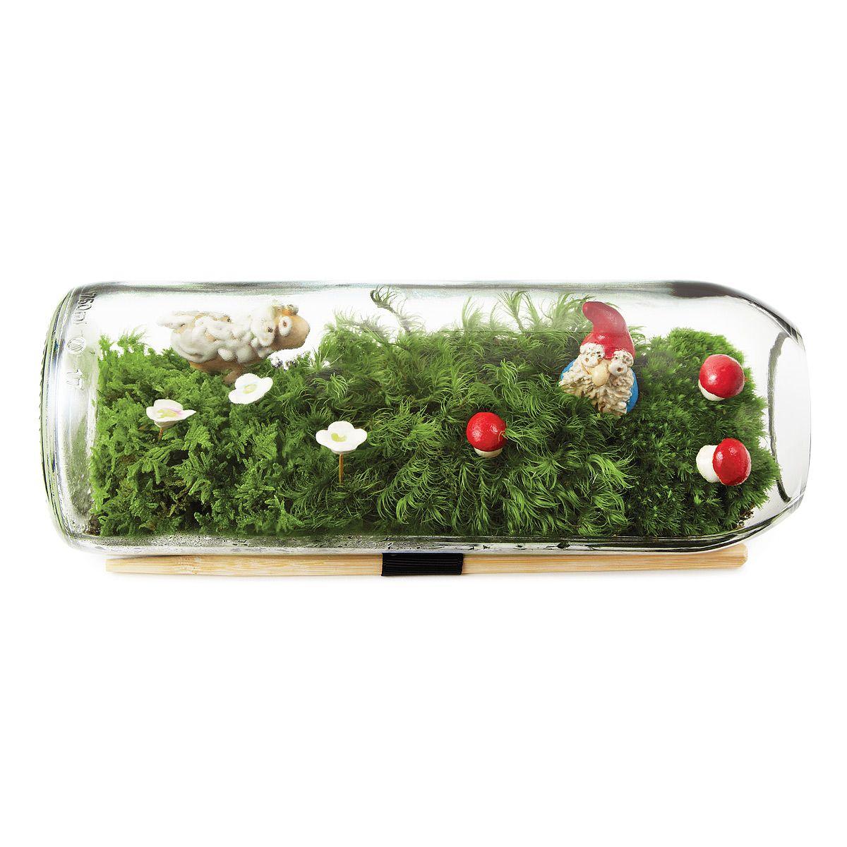 Moss Terrarium Bottle Diy Handmade Gifts Moss Terrarium