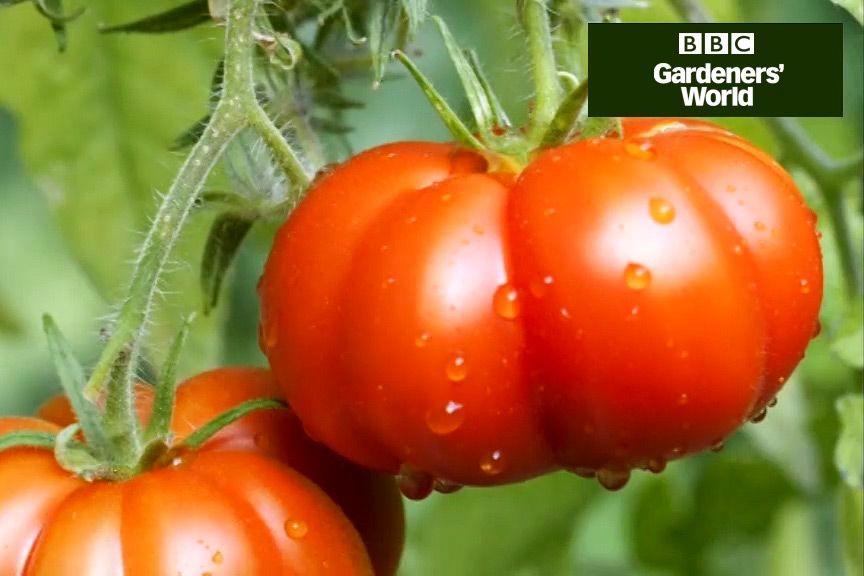 32ed6954f3ed37f6e10c18ccff45f9bc - Gardeners World Magazine Free Tomato Seeds