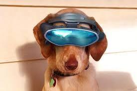 Realidade virtual para cães :)