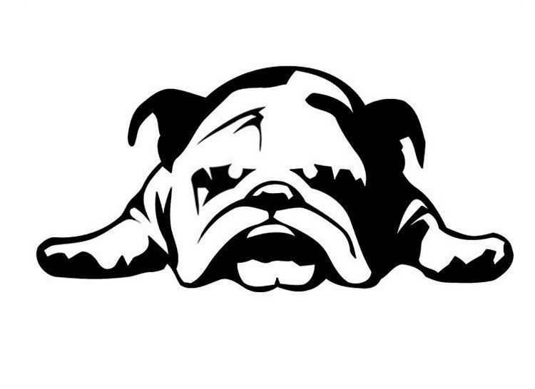 What S In The Box 1 Waterproof English Bulldog Car Decal Design 2