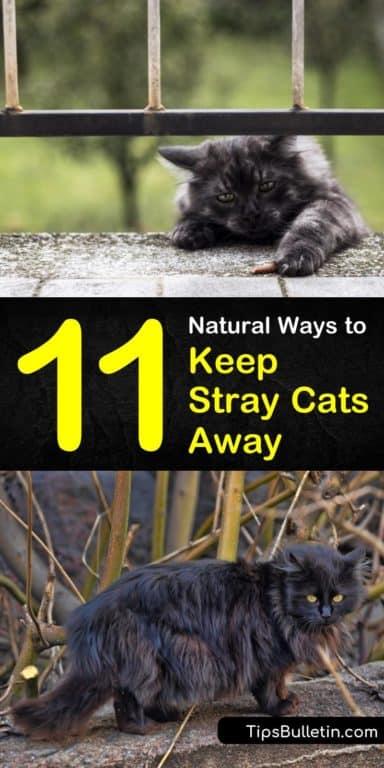 11 Natural Ways to Keep Stray Cats Away | Cat repellant ...