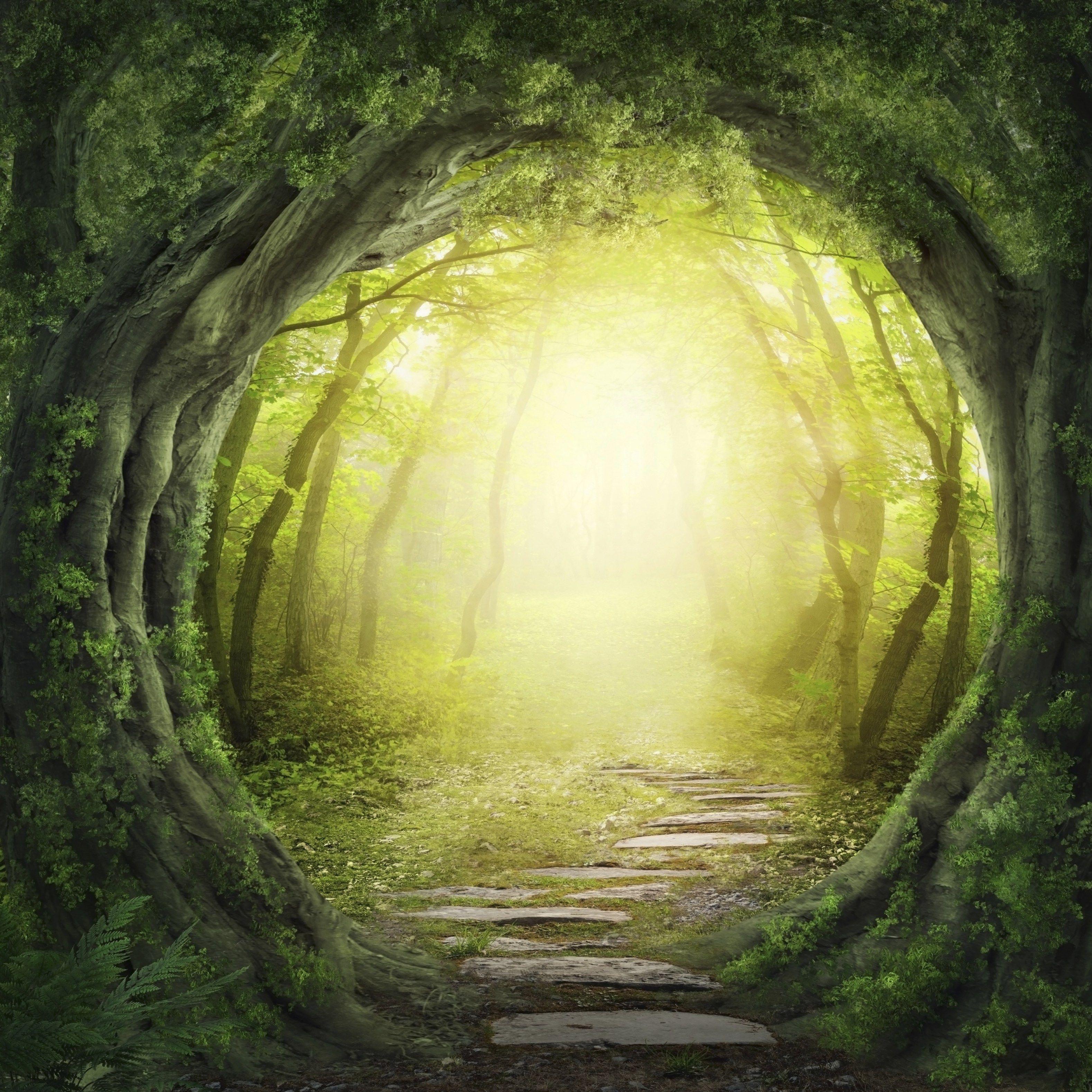 Magic Forest   Tìm Với Google