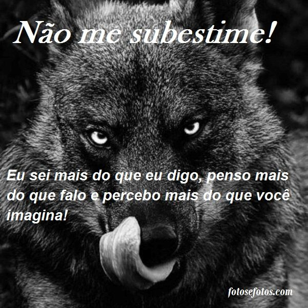 O Que é Good Morning Everyone Em Portugues : Lobo mau com frases fotos e seu portal de imagens