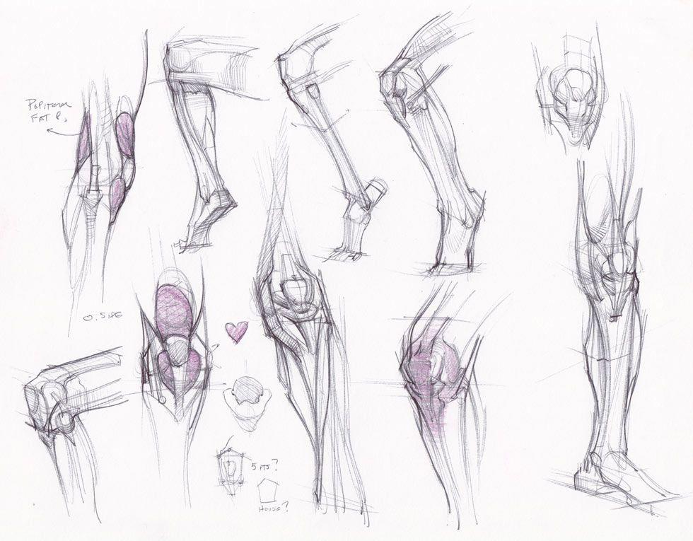Ziemlich Studie Tipps Für Anatomie Fotos - Menschliche Anatomie ...
