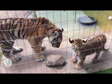 동물들이 자기 새끼를 가르치는 방법