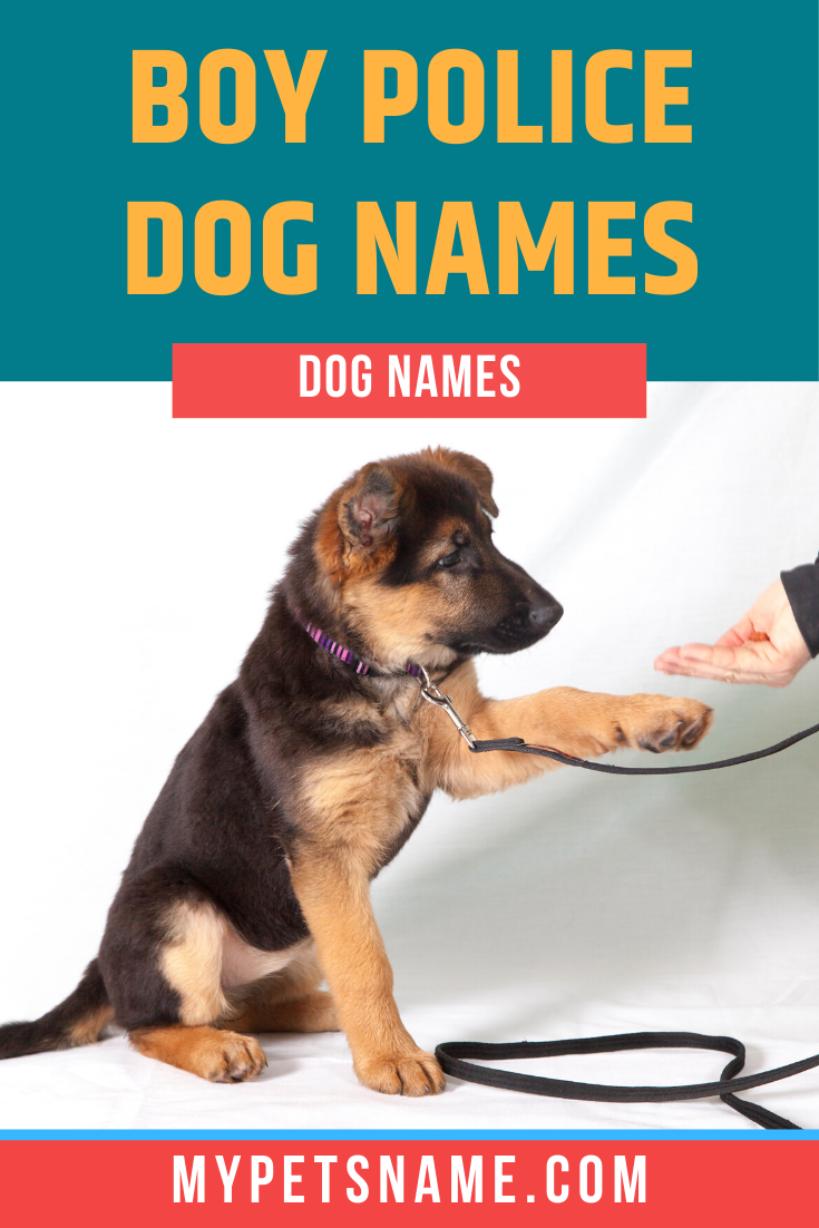 Boy Police Dog Names In 2020 Police Dog Names Dog Names Police Dogs