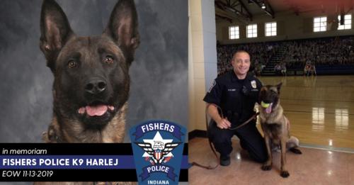 K9 Harlej Has Beautiful Memorial After Losing His Life While On Duty In 2020 Memories