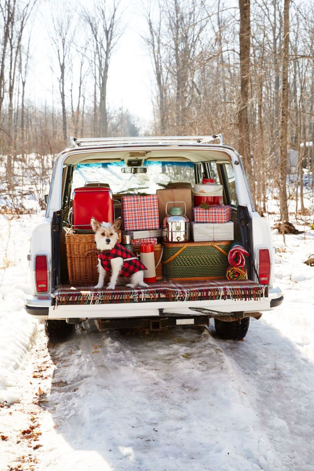 A Cozy Christmas Cabin Nestled in the Woods of Wisconsin. 'Out Back' Jane, a Portuguese Podengo, stands guard over a circa 1991 Jeep Grand Wagoneer. - CountryLiving.com