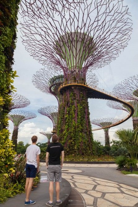 Gardens by the Bay – Supertree Grove and Skyway (Photo: Loz Blain) found at: http://www.gizmag.com/singapore-gardens-by-the-bay-supertree-cloud-forest/33590/pictures#6
