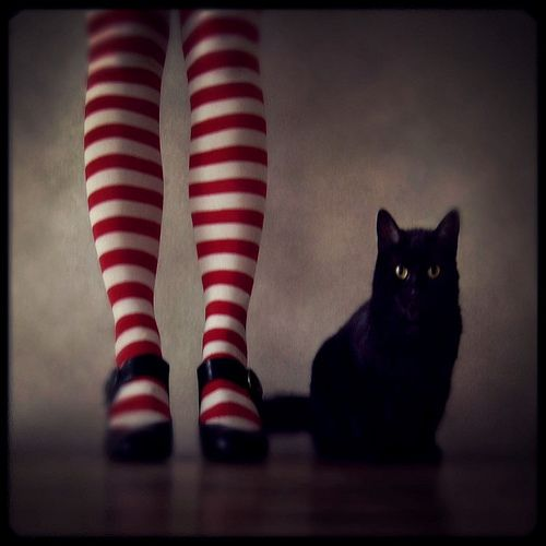 Striped stocking and cats just go perfectly together, don't they?