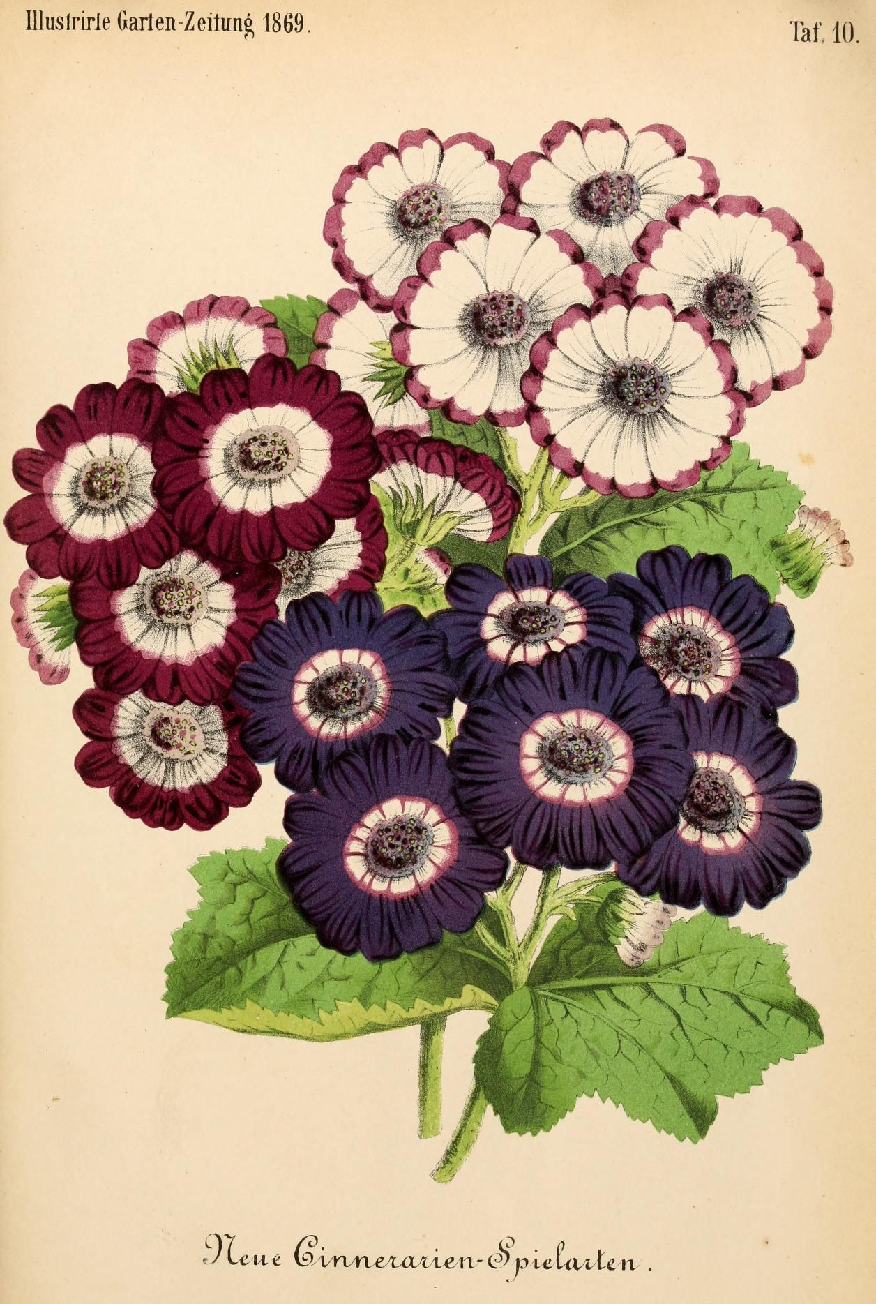 Bd 13 1869 Illustrierte Garten Zeitung Biodiversity Heritage Library Flower Art Botanical Illustration Blue Butterfly Wallpaper