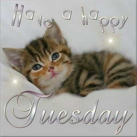 101 Funny Tuesday Memes When You Re Happy You Survived A Workday Good Morning Tuesday Happy Tuesday Images Tuesday Quotes Good Morning