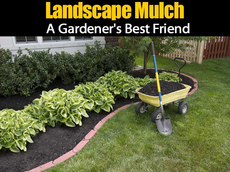 Benefits Of Landscape Mulch For The Garden With Images Inexpensive Landscaping Outdoor Landscaping Lawn And Garden