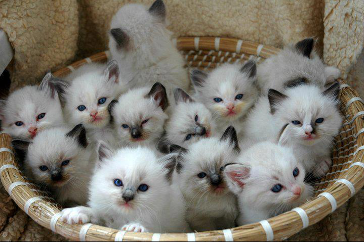 Here You Go A Basket Full Of Aaw Cute Animals Kittens Cutest