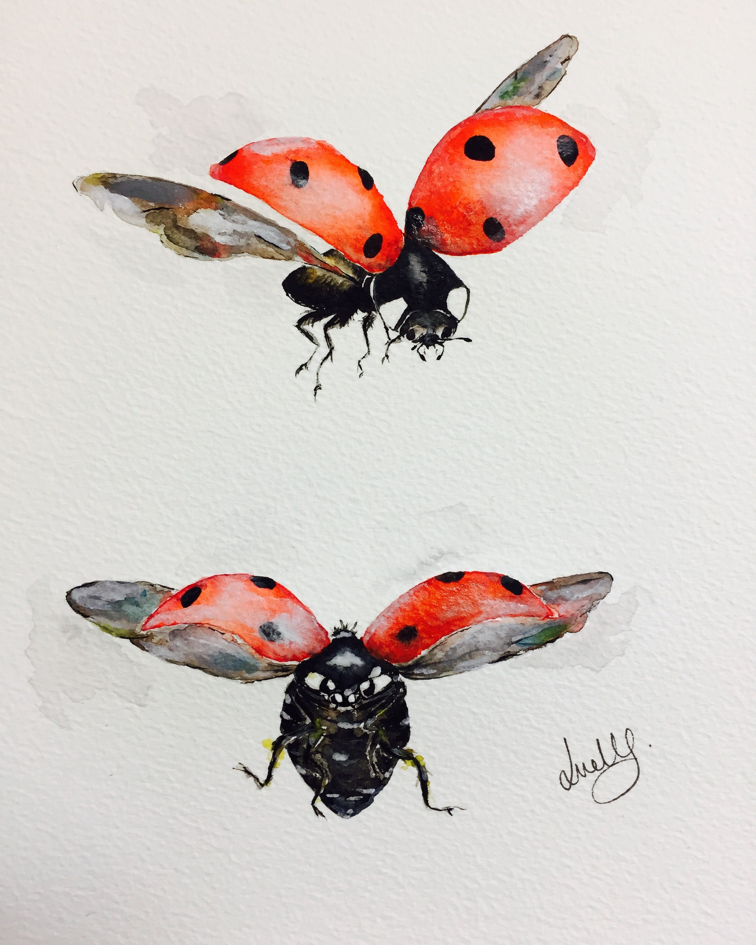 Ladybug Flying Drawing : ladybug, flying, drawing, Flying, Ladybugs, ♣️Fosterginger.Pinterest.ComMore, FOSTERGINGER, PINTEREST, Limitsでこのようなピンがいっ…, Ladybug, Tattoo,, Insect