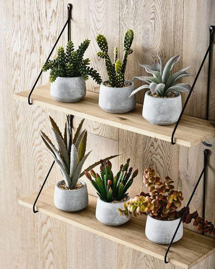 id es de d coration int rieure avec la plante d 39 aloe vera. Black Bedroom Furniture Sets. Home Design Ideas