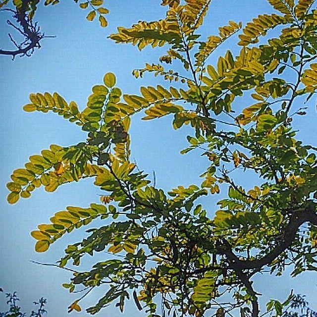 Merve Ongoren Constantini Mongoren Websta Mindfulness Meditation In The Tree Plant Leaves