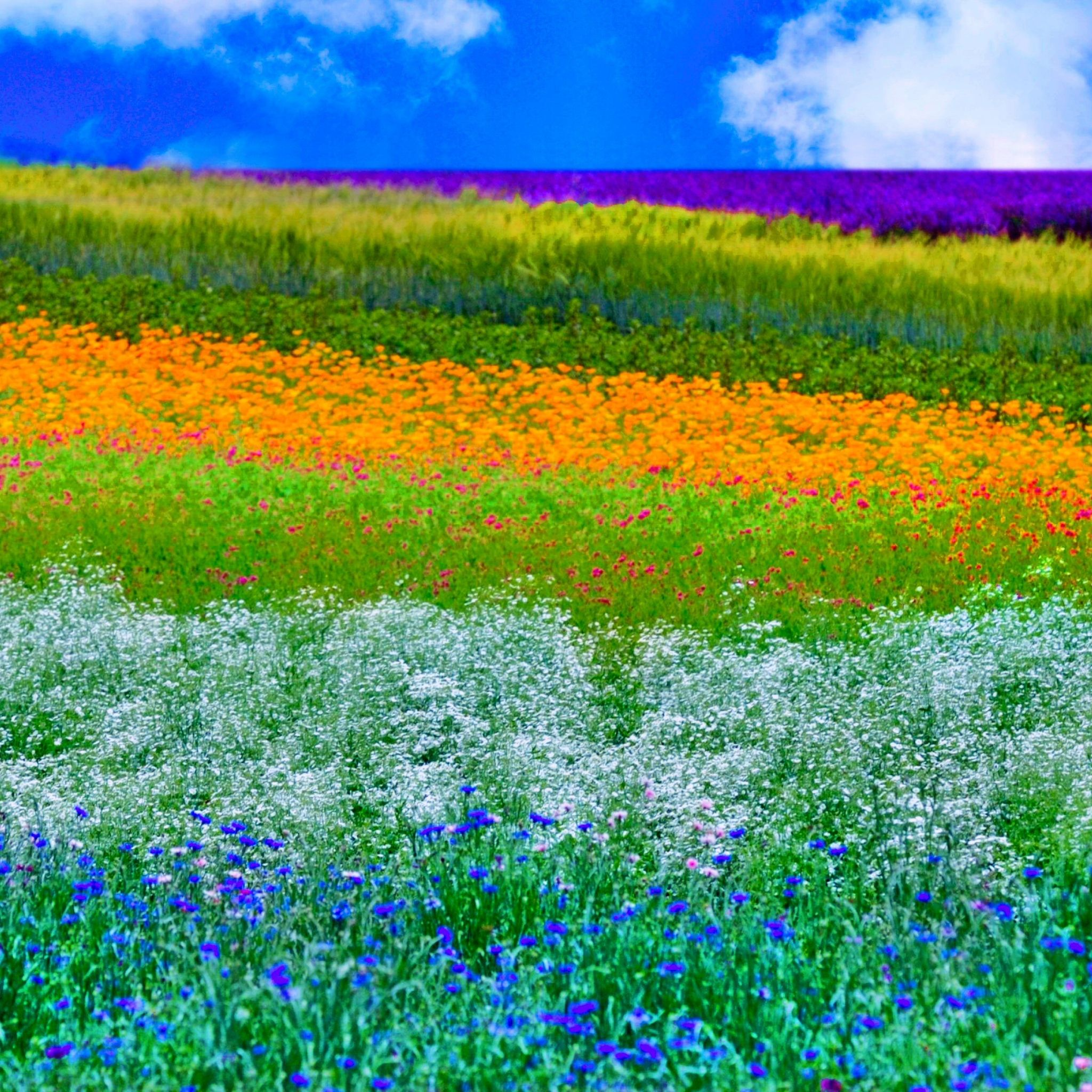 Beautiful Spring Field - Tap to see more dreams of spring ...