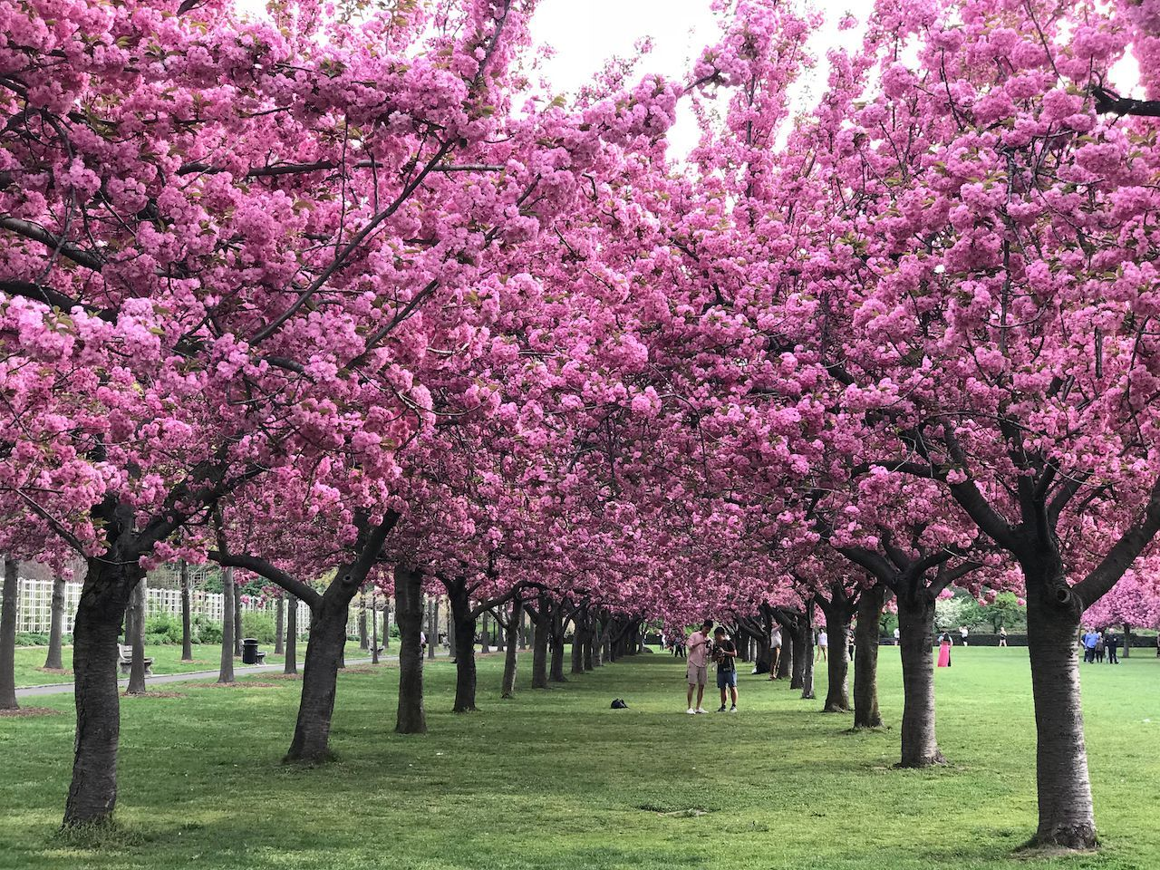 9 Big Beautiful Botanical Gardens Around The World Most 640 x 480