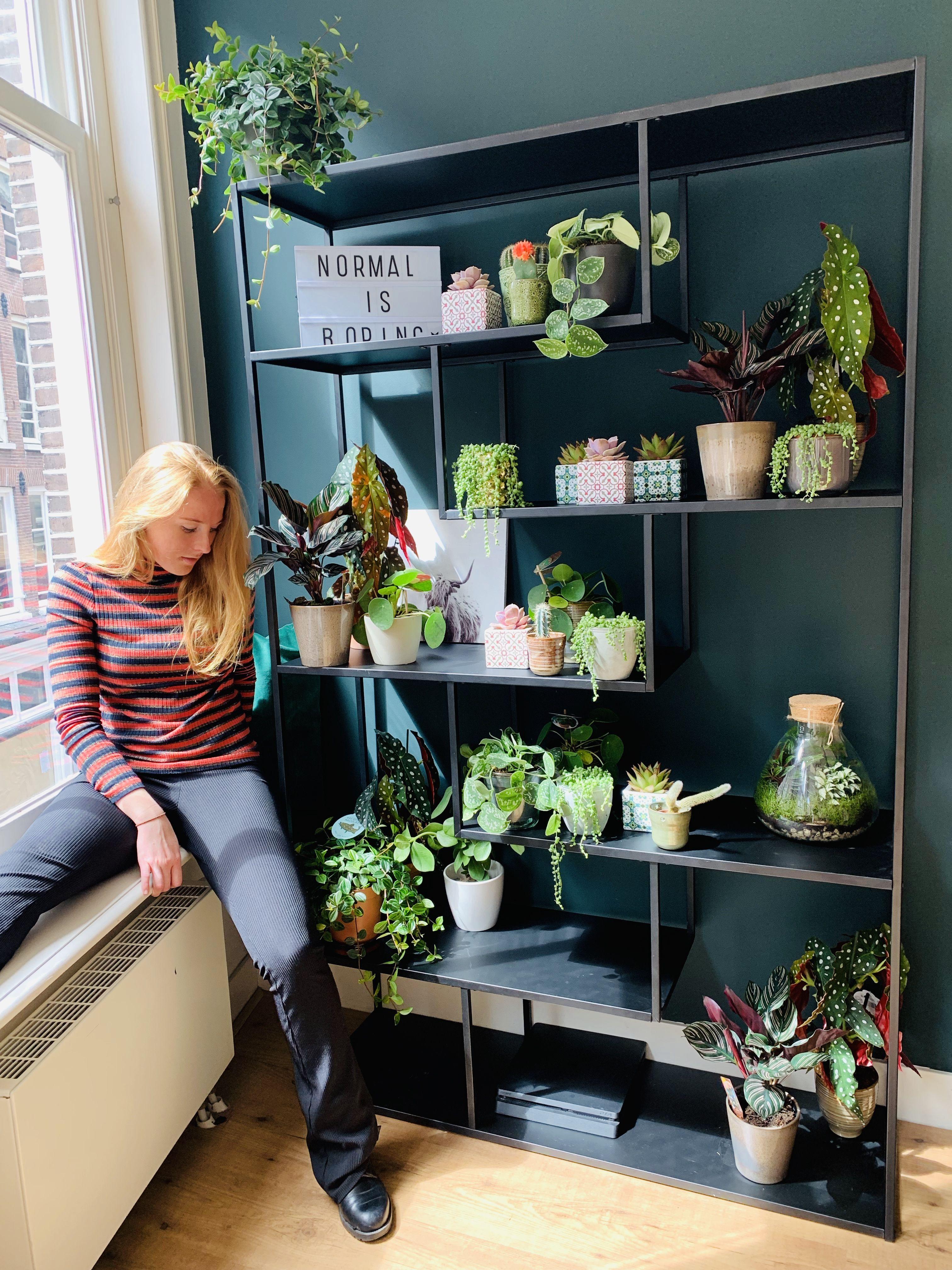 Conservatory Room Addition In The Uk 1040x1485 In 2020: Plantenkast / Groene Inrichting / Groen In Huis/ Planten In Woonkamer. Locatie: Amsterdam Model